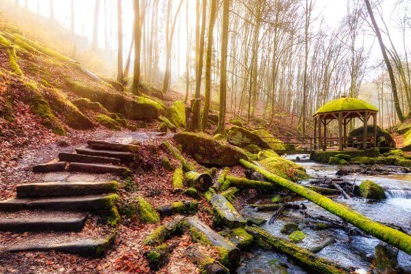 Atemberaubende Natur - Wald - Peters Hotel Homburg Jägersburg