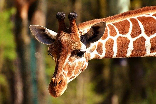 PETERS Hotel & Spa - Ausflugsempfehlung Neunkircher Zoo